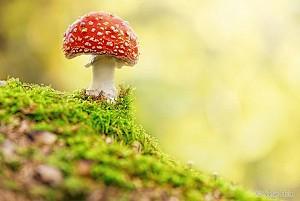 دیافراگم: عکاسی شگفت انگیر به سبک ماکرو  از موجودی دوست داشتنی به نام قارچ