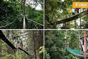 طراحی اعجاب انگیز 10 پل ساخته شده در دل طبیعت