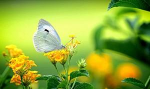 دیافراگم: تصاویر ماکرو تماشایی از حشرات