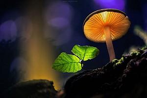 مارتین فیستر و جهان جادویی قارچهای درخشان