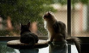 حال و هوای یک روز بارانی