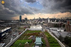 طراحی و معماری مزرعه ای بر روی بام