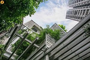 معماری سبز: بازسازی دفتر اداری با رویکرد ارتباط حداکثری با طبیعت