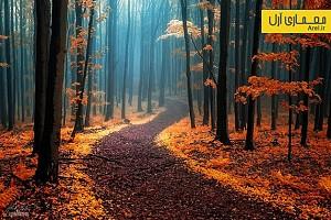دیافراگم: خلق تصاویری جذاب از جنگلهای پاییزی
