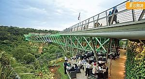 بررسی پل طبیعت، به عنوان نمونه ای از فضای جمعی در ارتفاع