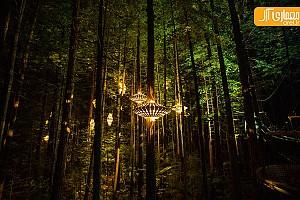 جنگلی در نیوزیلند، با درختان فانوسی!