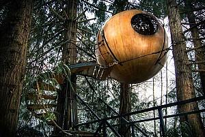 هتل خانه درختی