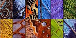 بال های پروانه، الهامی برای طراحی و معماری