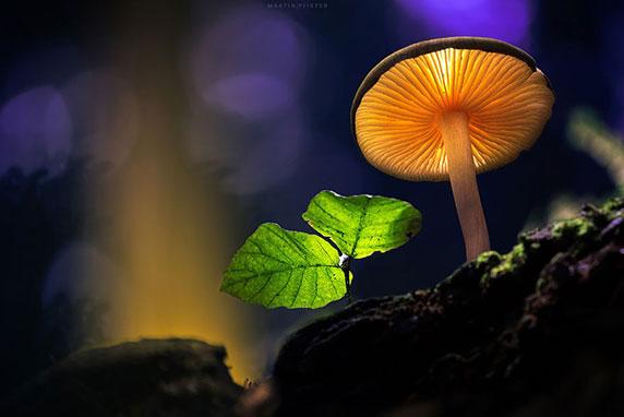 دیافراگم آرل،عکاسی طبیعت