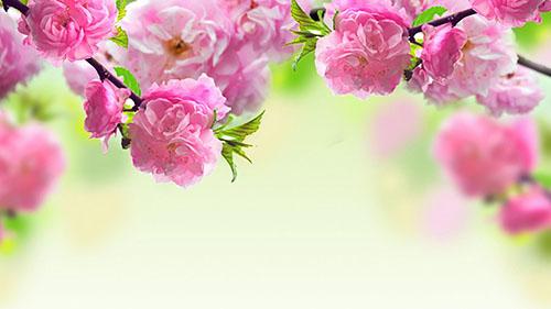 با تصاویری زیبا به استقبال بهار میرویم