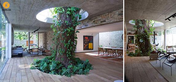 طراحی و معماری 10 ساختمان که بدون قطع درخت انجام شد