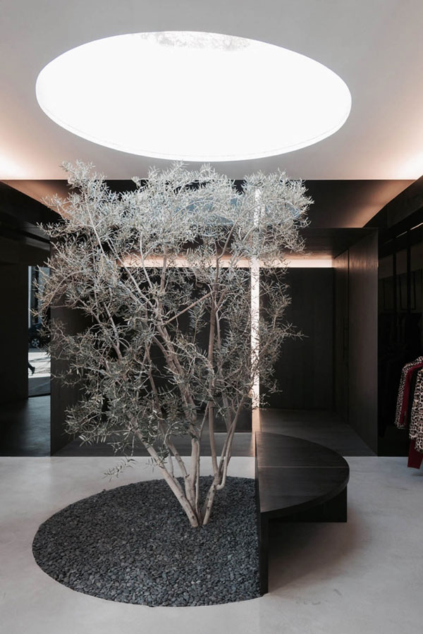درخت زیتون وسط فروشگاه لباس در لس آنجلس