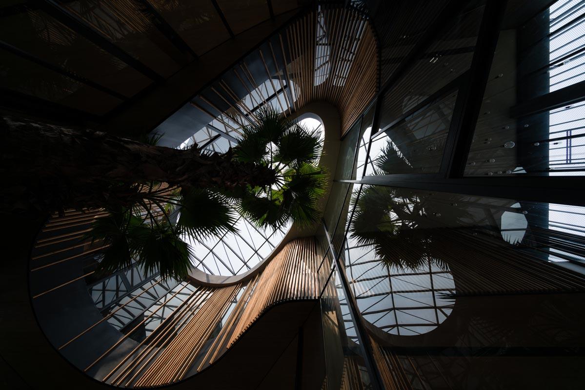 استفاده از گیاهان در طراحی داخلی